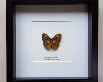 Unmarked Pink Forester Butterfly Frame