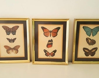 Pictures illustrations butterflies / vintage butterflies illustrations