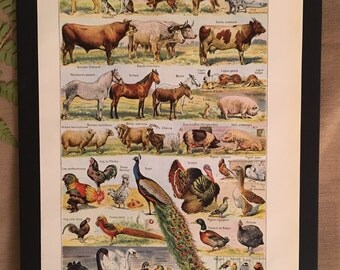 Board naturalist, history & natural sciences - pets - Larousse