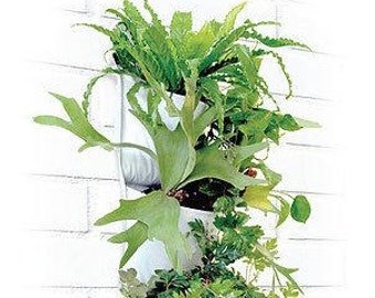 Vertical Garden Pocket Planter - Invivo Triple Pocket