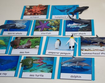 Ocean Life 3-part cards---Montessori educational early learning materials