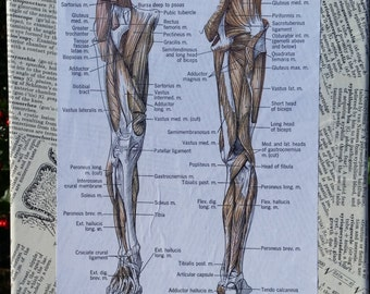 Anatomy of Art: Deep Muscles of the Human Leg Canvas and Pages