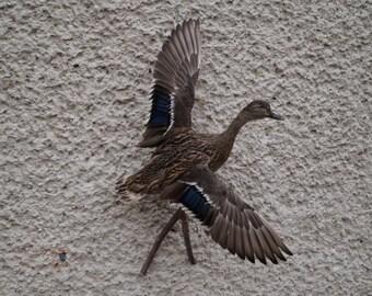 Mallard Duck Female Taxidermy