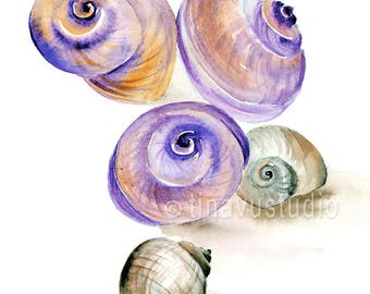 seashell art, watercolor seashell, seashell painting, nautical painting, watercolor nautical wall decor, nautical art print, giclee print