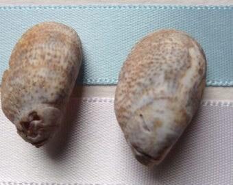 Seashell earrings 24