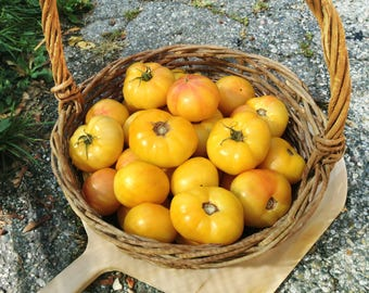 Golden Queen (organic) tomato seeds - Pack of 15  Non-GMO
