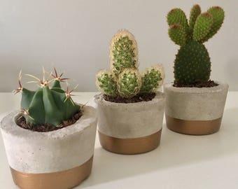 Trio of Concrete Rustic Cactus/Succulent Pots | Planters | Natural Gift | Cacti | Metalic Gold