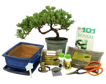 Premium Bonsai Kit  - Windswept Design (1060)