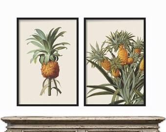 Pineapple Print, Botanical Print of Pineapple,  Fruit Print Set, Fruit Wall Art, Kitchen Print Art, Art Prints, Fruit Print Set, French Set
