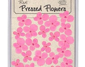 Pink Hydrangea 25 Flowers