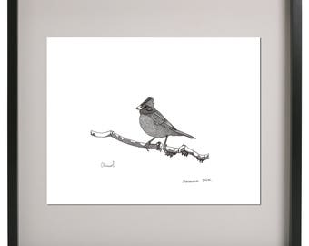 Chincol (Chilean Bird) illustration, wall art, black and white, drawing, home decor