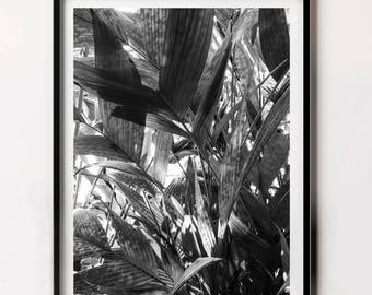 Black an White Nature Photography, Leaf Wall Decor, Tropical Leaf Photo, Botanical Art, Printable Art