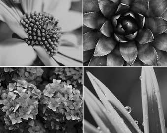 Black and White Photos, Flower SVG, Set of 4 Prints, Garden Art, Set of 4 Wall Art, Black and White Prints, Flower Prints, Garden Decor, 173