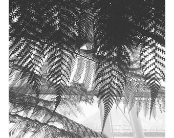 Photography Print, Black and White Botanical, Plants, Green Life, Fine Art, Wall / Home Decor, Poster, Motion, FERN