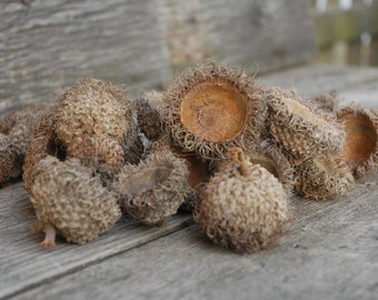 Natural Burr Oak Caps/ Burr Oak Acorn Capps, Burr Oak Hats