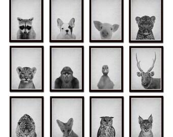 Set of 12 prints, Texture Wall Art, Modern Minimal Black and White Animal, Modern Minimalist Print, Black and White Animal Photo Print *8*