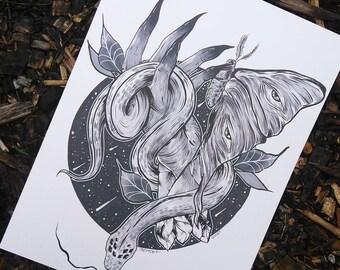 Luna Moth and Snake Print