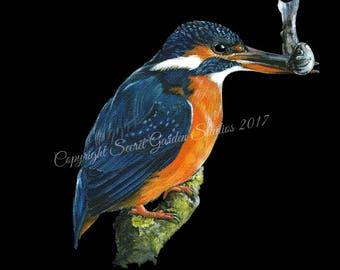 British Wildlife Art - Kingfisher