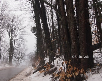 Country Road, forest, woods, countryside, tree, trees, snow, winter, landscape, original art, upstate New York