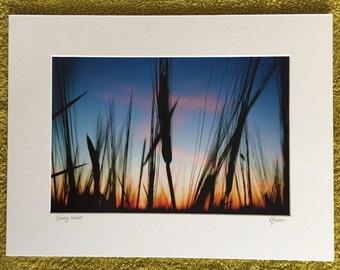 Barley Sunset