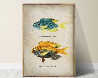 Fish Print Fish Wall Art Fish Art