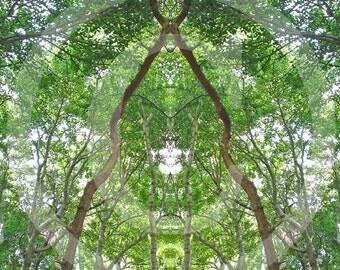 forest secret 8, posters and fine art print 20 x 30 cm 30 x 40 cm, fine art print 29, 7 x 42 cm
