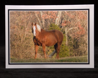 A Horse Posing In The Evening Light 5x7 Blank Card By ThomasMinutoloPhotos