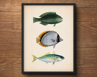 Fish art – Coastal art poster, Nautical prints, Beach art, Vintage art, Coastal prints, Tropical art