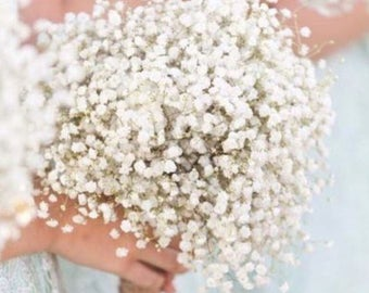 Real Baby's Breath Bouquet Collection |  Fresh Babys Breath Bouquet | Burlap Bouquet Babys Breath Boutonniere Custom