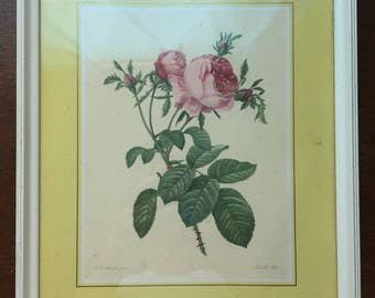 Framed floral lithograph by P.J. Redoute