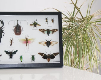 Large frame insects