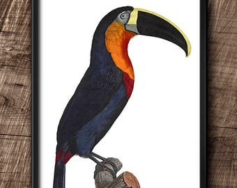 Toucan · Instant Download · Birds · Exotic · Vintage · Wall · Printable · Digital File #103