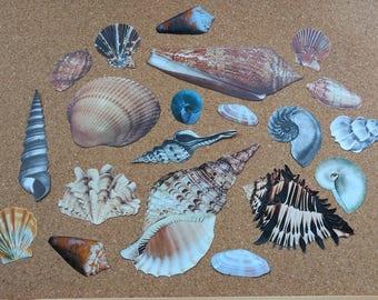 SALE Vintage Sea Shells Beach Themed Ephemera Scraps Grab Bag for Scrapbooking, Card Making, Decoupage, Junk Journalling, Collage