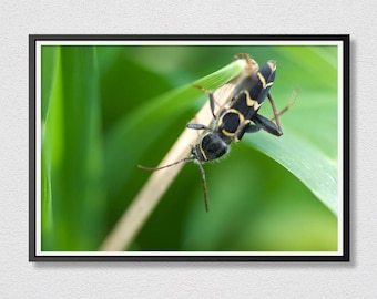 Insect Printable Art - Photograph Art - Instant Download - Printable Art - Insect  on Leaf - Close Up Print - Macro Photo.