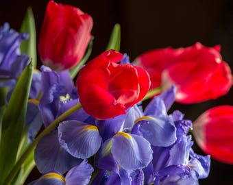 Flowers Red Tulips and Iris canvas or poster wall art