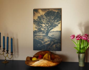The olive tree - Giclée on real wood