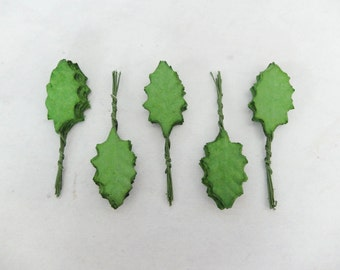 50 mulberry green holly leaves