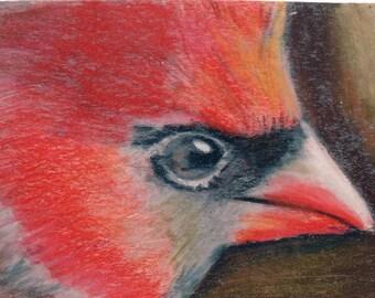 original art  aceo drawing red cardinal bird
