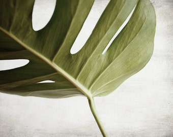 Tropical leaf wall art minimal botanical photography green gray living room art home decor 'Ceriman Leaves Four'