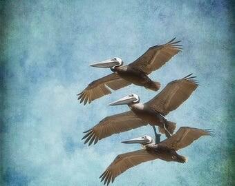 Nature Photography, Pelicans Print or Canvas Gallery Wrap, Bird Photograph, Animal Art, Flight, Wings, Summer Print, Beach Decor - Three