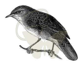 Digital Bird Artwork Illustration Download Transfer Scrapbooking Crafting Printable Clip Art Image