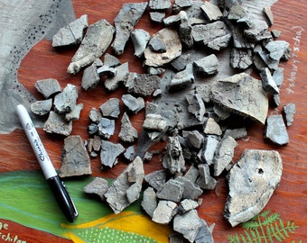 Exploded turtle fossil shell for reconstruction, crafts, jewelry and more