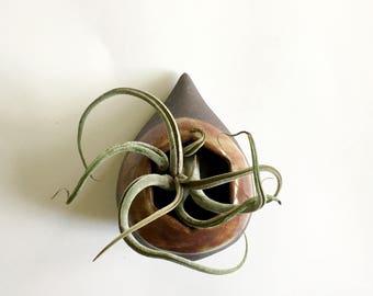 Raindrop wall vase - air plant holder- succulent planter - hexagon opening