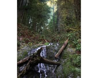 Redwood Ravine, Fine Art Photography Print, Rustic Home Decor, Magical Forest Wall Art Print