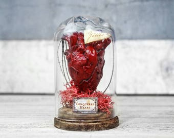 Anatomical Heart in Glass Dome Display - Miniature - Gothic Decor - Odd Gift - 2.75 x 1.73 inches / 7 x 4,4 cm