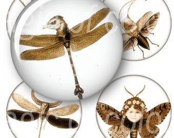 Whimsy Entomology   - 63  1 Inch Circle JPG images - Digital  Collage Sheet