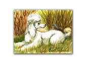 White Poodle Blue Bird Artwork  LLMartin Original Watercolor  Painting  Virginia Country