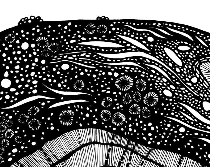 Ocean Fauna Pen & Ink