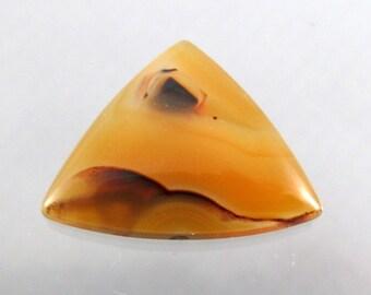 Gorgeous Piranha Agate Designer Cabochon SALE 33% OFF