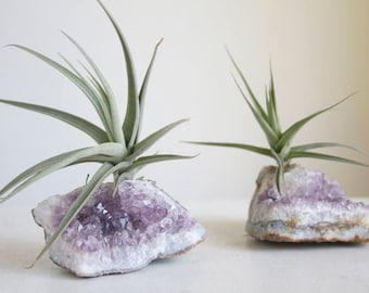 Amethyst Geode Chunk With Air Plant, Unique Airplant Planter, Sparkling Crystal Garden, Gift For Her, Teacher, Nature Lover, Friend